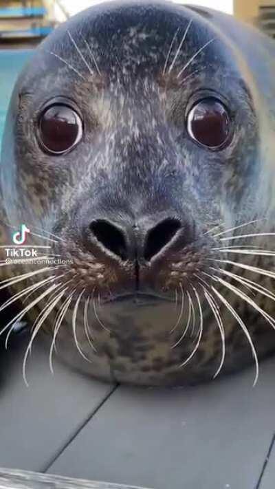 Sea puppy 🐶