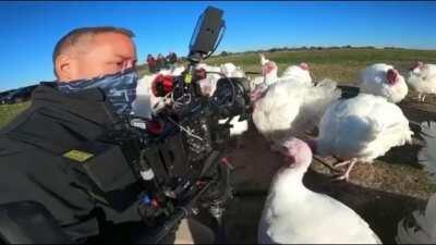 Turkeys are mean.