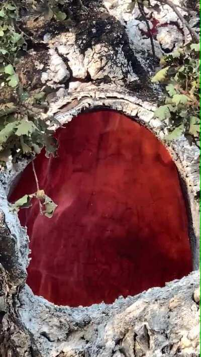Fire burning inside of a tree