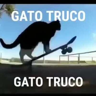 gato truco