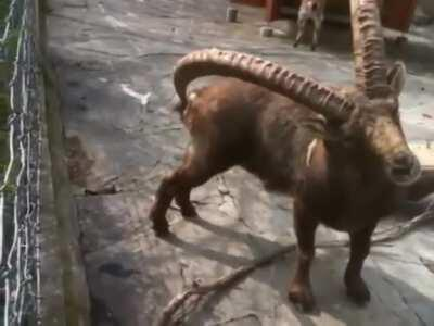 Animals are evolving