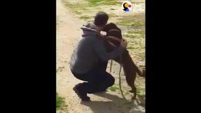 Dog Who'd Been Lost For 2 Years Doesn't Realize Dad's Standing Right In Front Of Her.