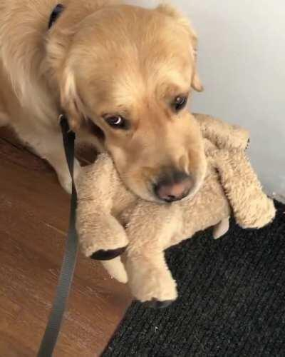 Barley and his stuffed best friend Fluffy do everything together but for the last six weeks, Fluffy has been in covid-19 quarantine. Barley still tries to take him outside every single morning. Should we let Fluffy out into the wild again? Yay or nay?