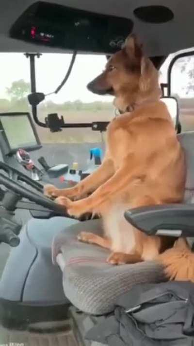 No really, it's a genuine German dog driving a Steyr CVT 6230 Tractor --Getting ready to sow his seed :)