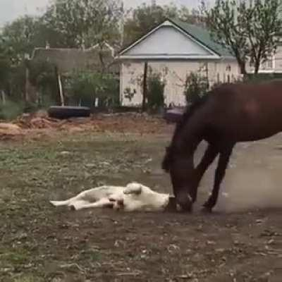 Best friends playing.