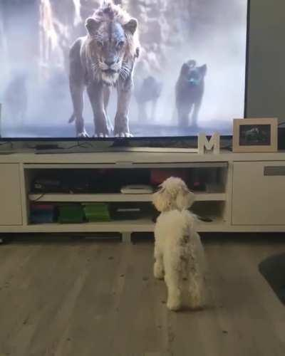 When Lion King gets too real for the doggo