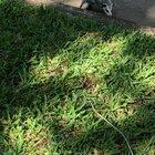 Saw this baby possum on my walk this morning. Why is it spinning like this?