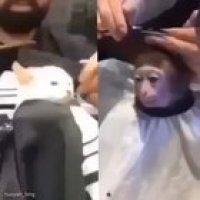 Bruh we need war against monkeys