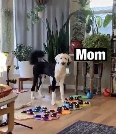 Dog communicates with her owner