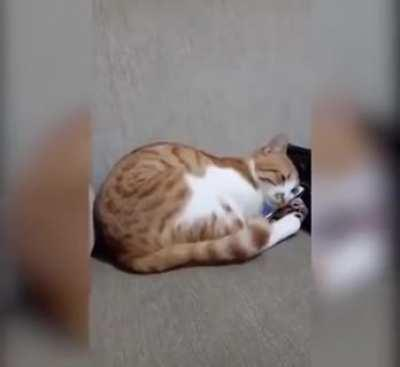 Cat Seeing Her's Recently Deceased Owner On A Video (Old video though)