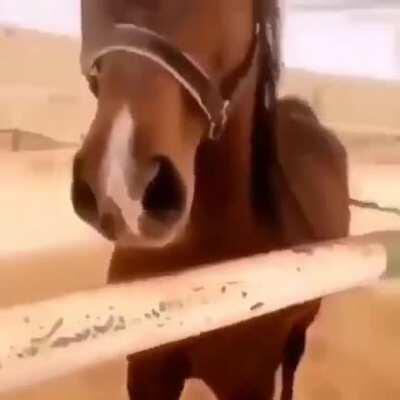This Horse