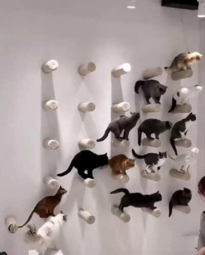 sIck fUckinG hUmaN cOLlects cAts fOR oWn pErsoNaL cOlLecTiOn