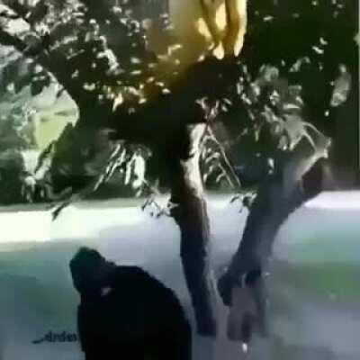 nooooooo!!