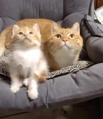 kitty cat startle ^^