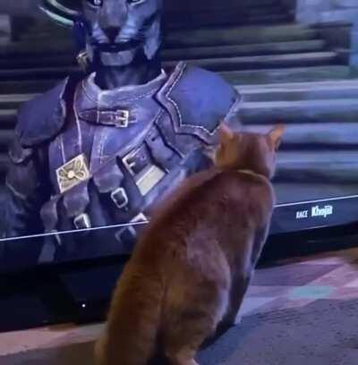 Kitty doesn't know how to handle a Khajit