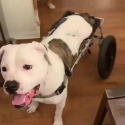 Doggo is finally able to walk