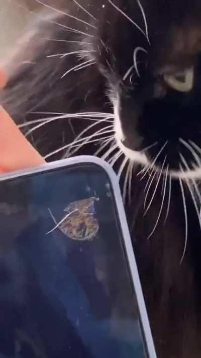 WCGW letting your cat bite your laptop
