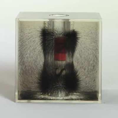 Visualizing magnetic field lines with a cylindrical bar magnet and iron powder suspended in oil