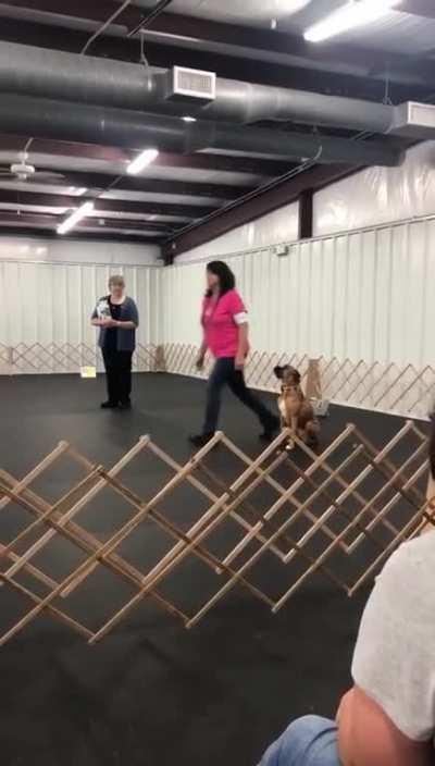 Just a normal day if dog training.
