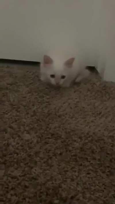 Don't do that pounce thing