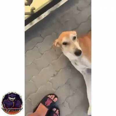 WCGW provoking a random dog