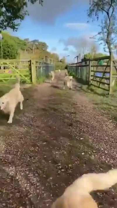 Here come the doggos