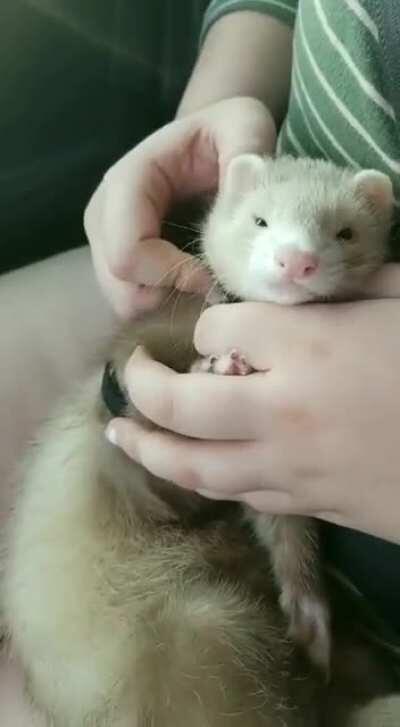 Finn enjoying some after-walk rubs