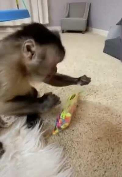 George the monkey open surprise package :)