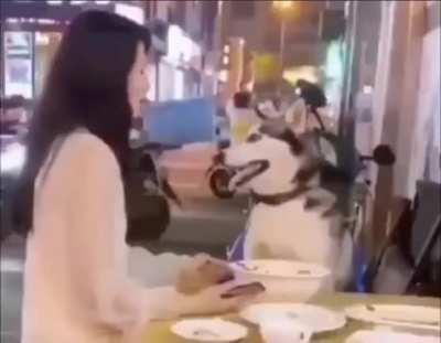 Doggo don't like