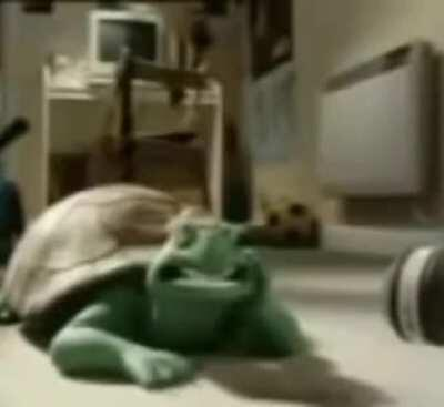 Here you go, some footage of a singing arab turtle.