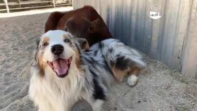 Two friends at The Gentle Barn Sanctuary