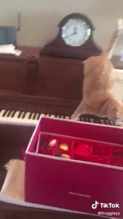 Cat tries to get off a piano and accidentally makes music as well!