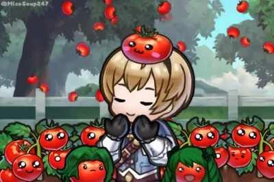 tomato season~