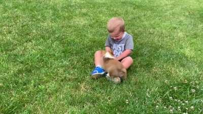 When you combine a 2 year old human with a 9 week old corgi... ❤️