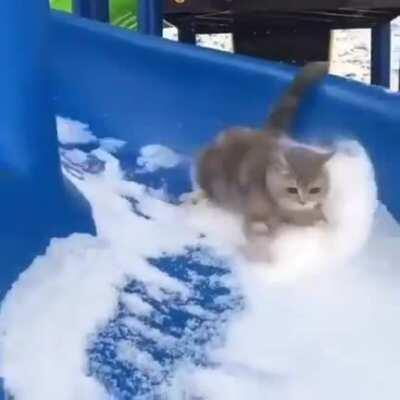Cat enjoying snow-slide
