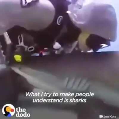 Removing Hooks from Sharks