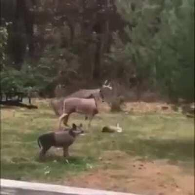 thank goodness that other deer isn't real...
