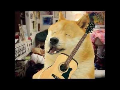 Doge sings a wacky song