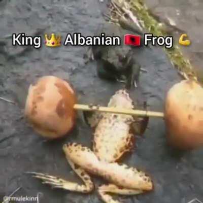 Serbitch frog weak Albania frog best 💪💪💪🇦🇱🇦🇱🇦🇱
