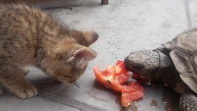 [Random] Creo que el gato se rompió.