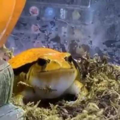 hahahha i call frog angy mango cuz it orange hehe