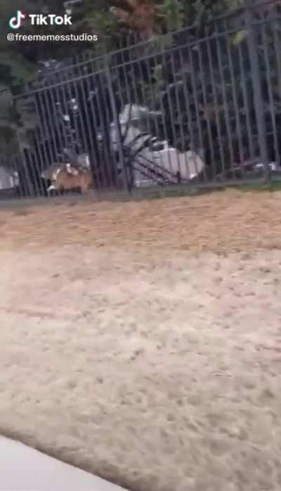 A puppy's revenge