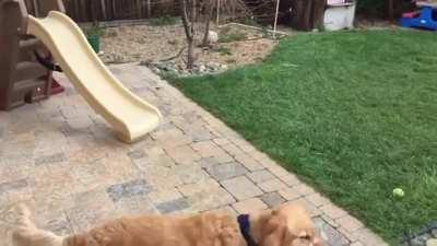 Dog can't catch food