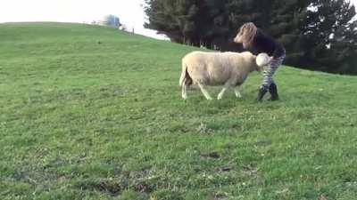 Sheep Playing Rugby