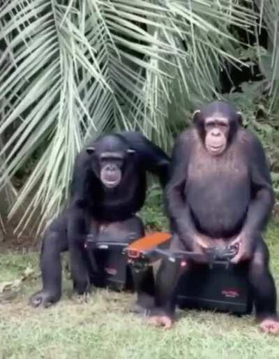 Planets of the Apes: Step one Initiation