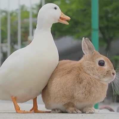 henlo there , its honk and chonk