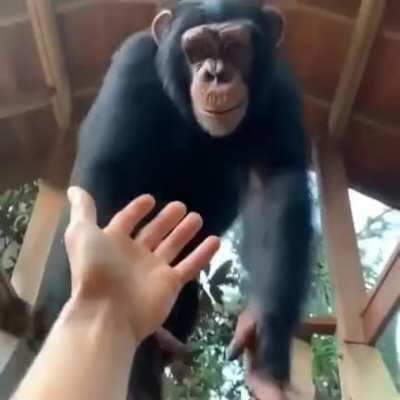Monkey helps weak stinky h*man