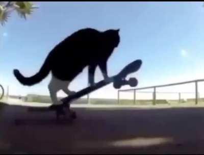 Tony cat not hawk