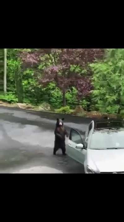 They scared the hell out of that bear