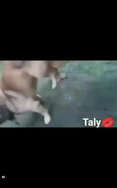 El perro se culeo a la gallina.....porno de calidad....